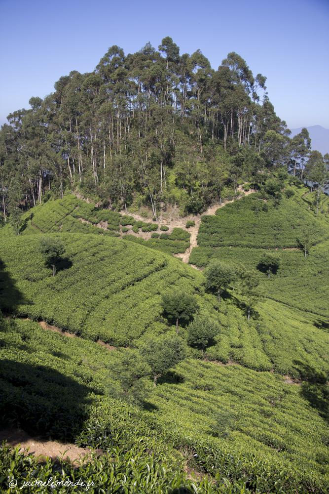 Sri Lanka Haputale 4