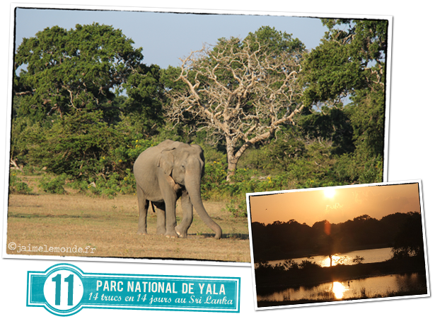 11 - Parc national de Yala