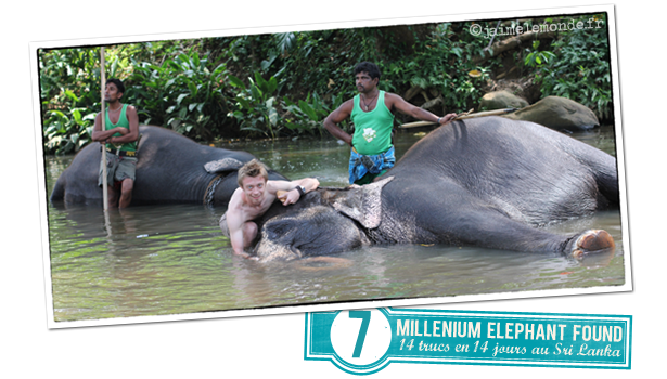 7 - Millenium Elephant Foundation