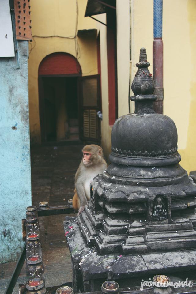 Blog voyage - 50 photos au Népal - ©jaimelemonde (28)