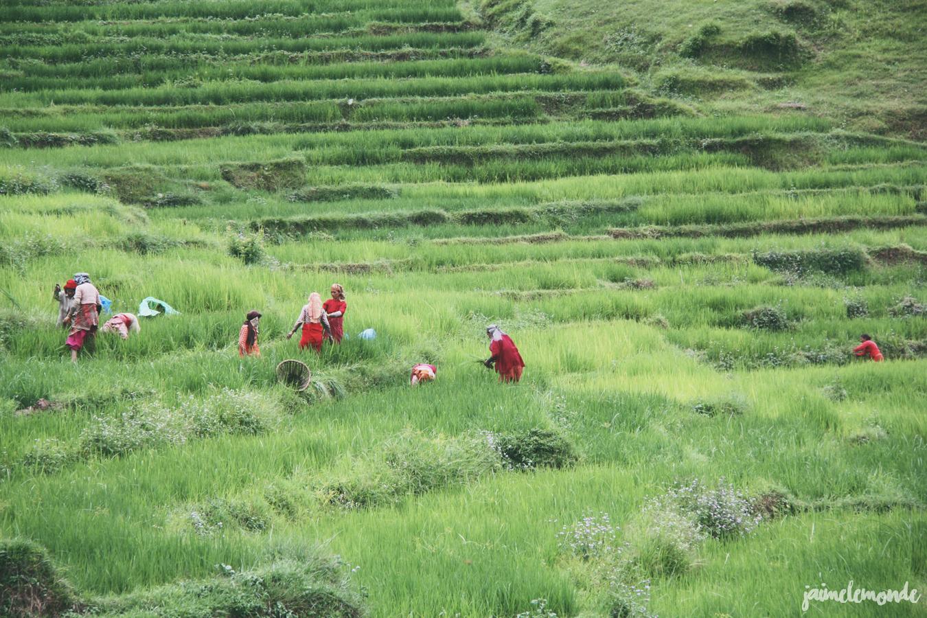 Blog voyage - 50 photos au Népal - ©jaimelemonde (44)