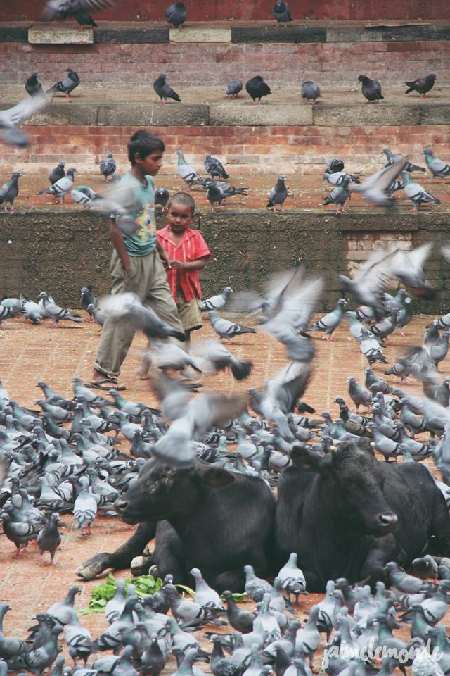 Blog voyage - 50 photos au Népal - ©jaimelemonde (47)