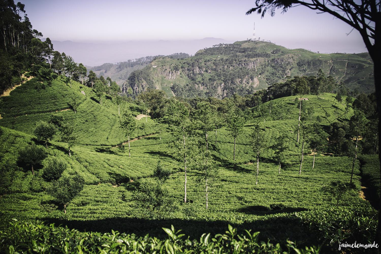 Haputale - Voyage au Sri Lanka (1)
