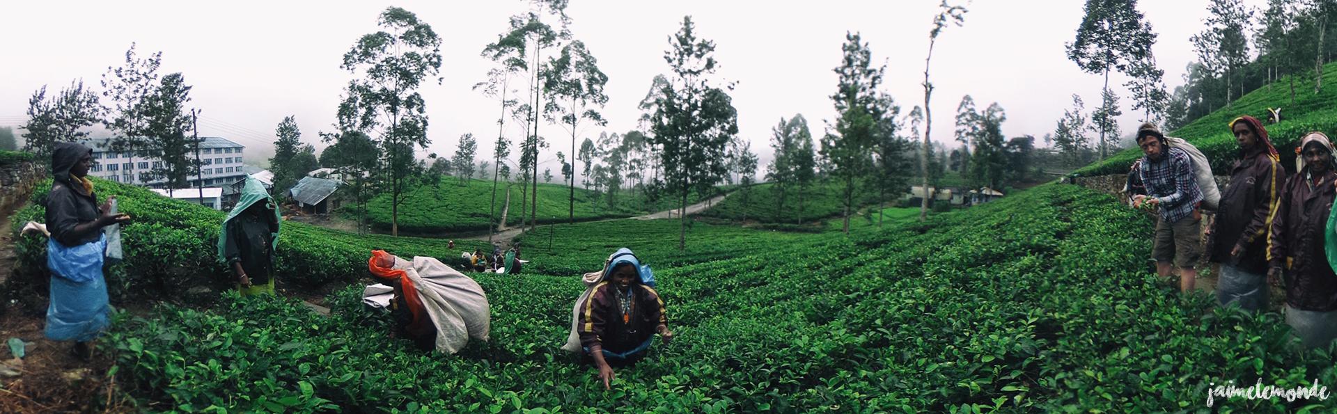 Haputale - Voyage au Sri Lanka (10)