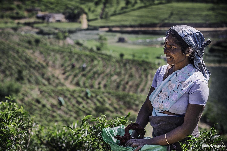 Haputale - Voyage au Sri Lanka (4)