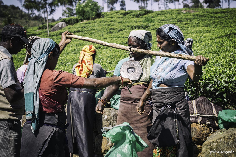 Haputale - Voyage au Sri Lanka (6)