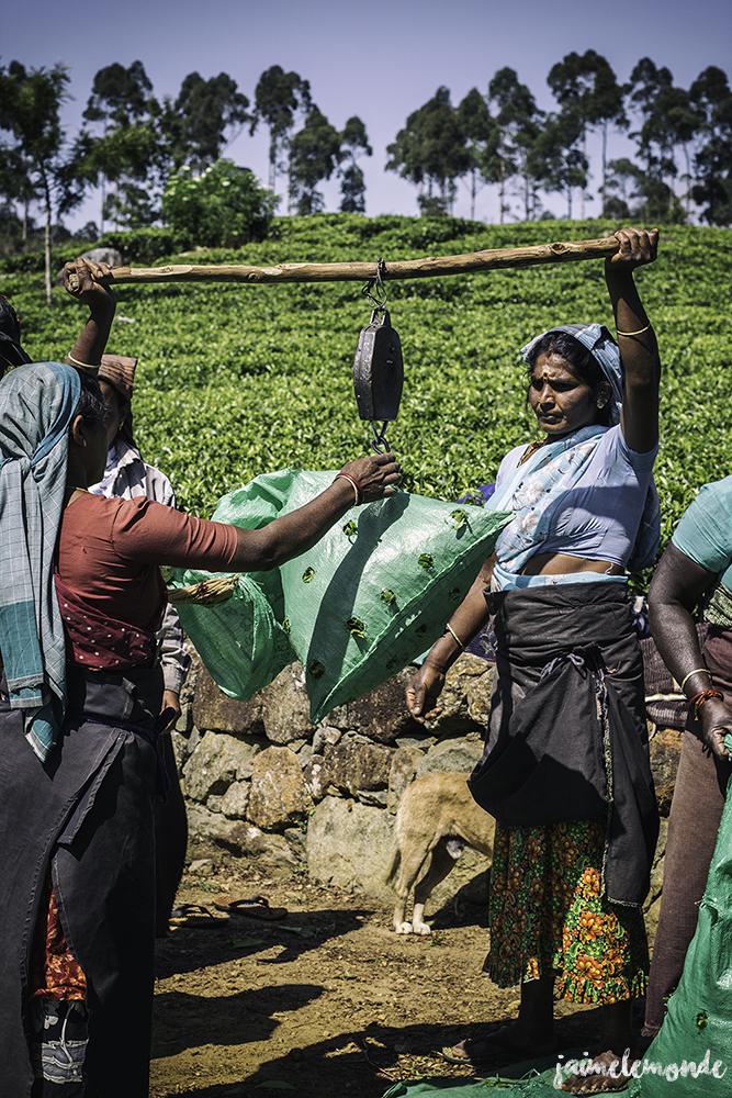 Haputale - Voyage au Sri Lanka (7)