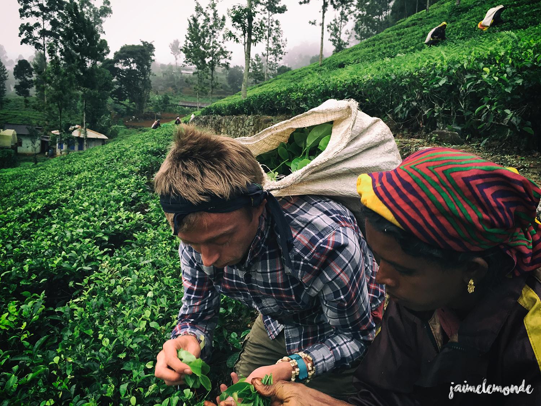 Haputale - Voyage au Sri Lanka (9)
