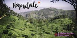 Haputale - Voyage au Sri Lanka (une)