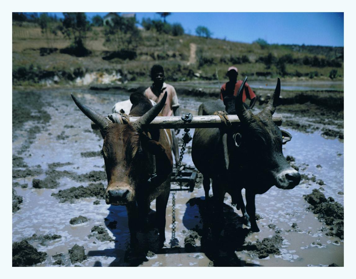 madagascar-jaimelemonde-fr-mamiya-press-film-fp100c-21