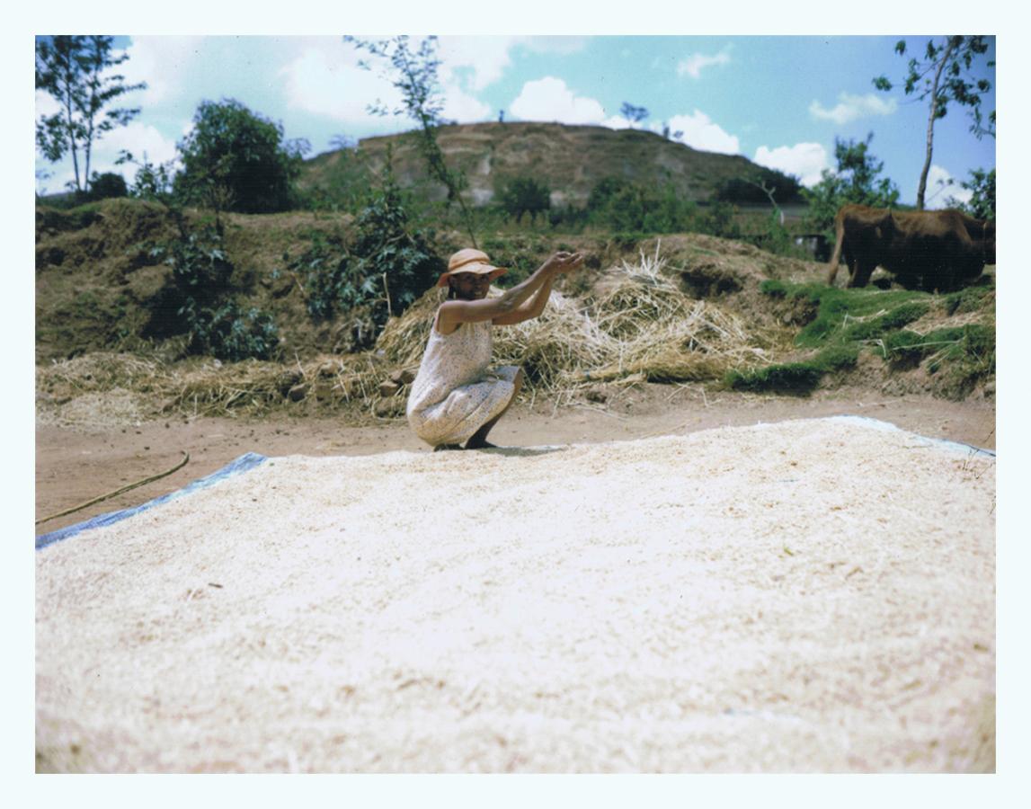 madagascar-jaimelemonde-fr-mamiya-press-film-fp100c-9