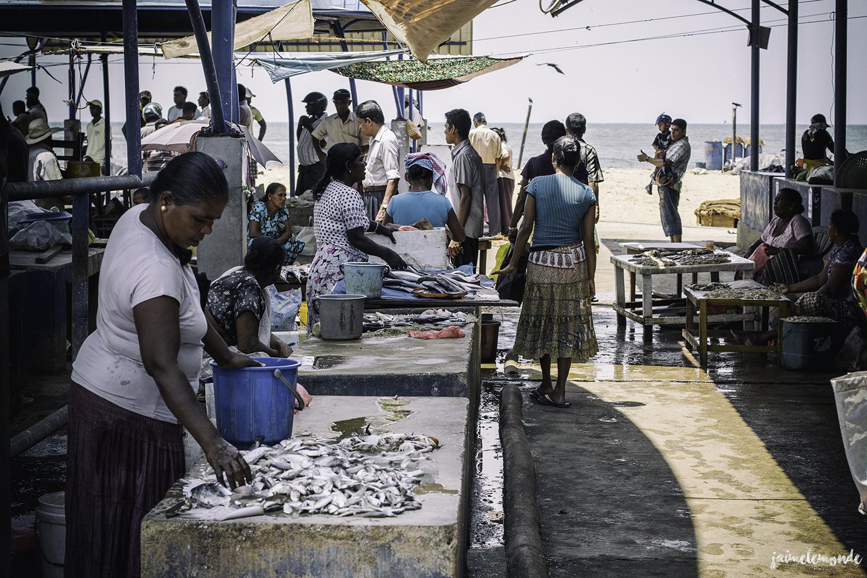 Negombo - Voyage au Sri Lanka (4)