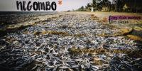 Negombo, idéal pour débuter ton voyage au Sri Lanka !