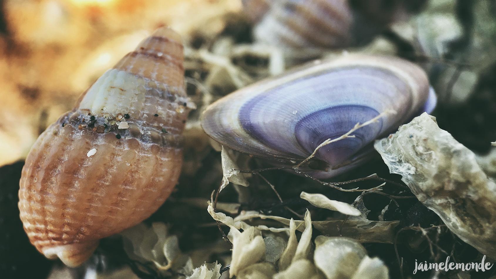 Pixter - Macro pro - Blonville sur mer - ©jaimelemonde (6)