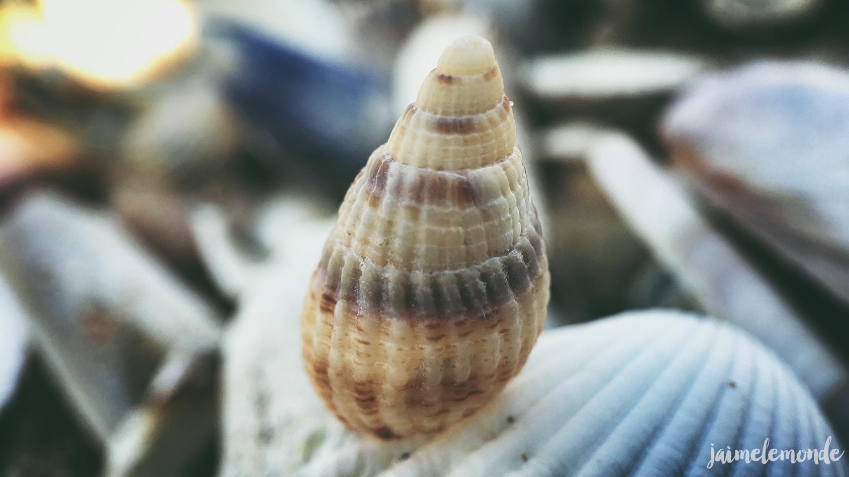 Pixter - Macro pro - Blonville sur mer - ©jaimelemonde (7)