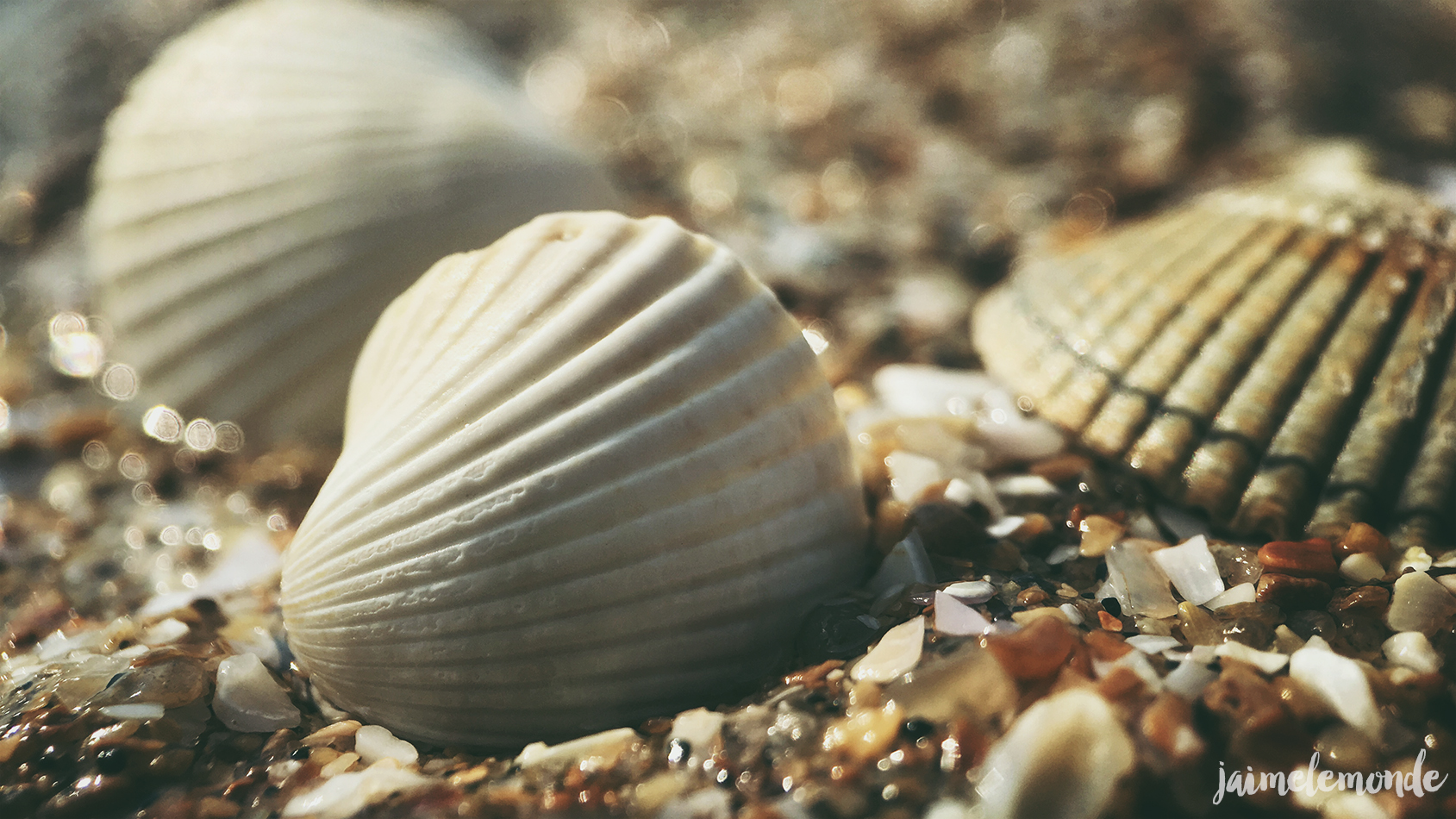 Pixter - Macro pro - Blonville sur mer - ©jaimelemonde (1)