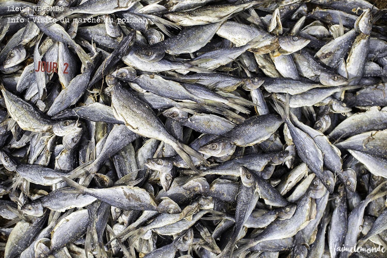 Voyage Sri Lanka - Itinéraire Jour 2 - 3 Negombo - Marché aux poissons séchés - ©jaimelemonde