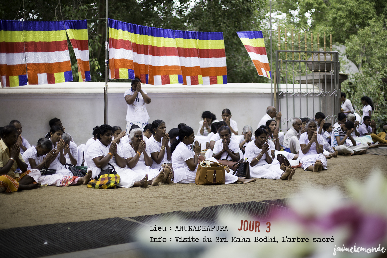Voyage Sri Lanka - Itinéraire Jour 3 - 3 Anuradhapura - Visite du Sri Maha Bodhi - ©jaimelemonde