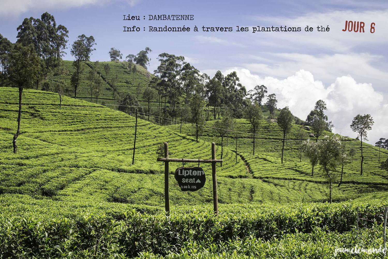 Voyage Sri Lanka - Itinéraire Jour 8 - 3 Dambatenne - Randonnée vers l'usine - ©jaimelemonde