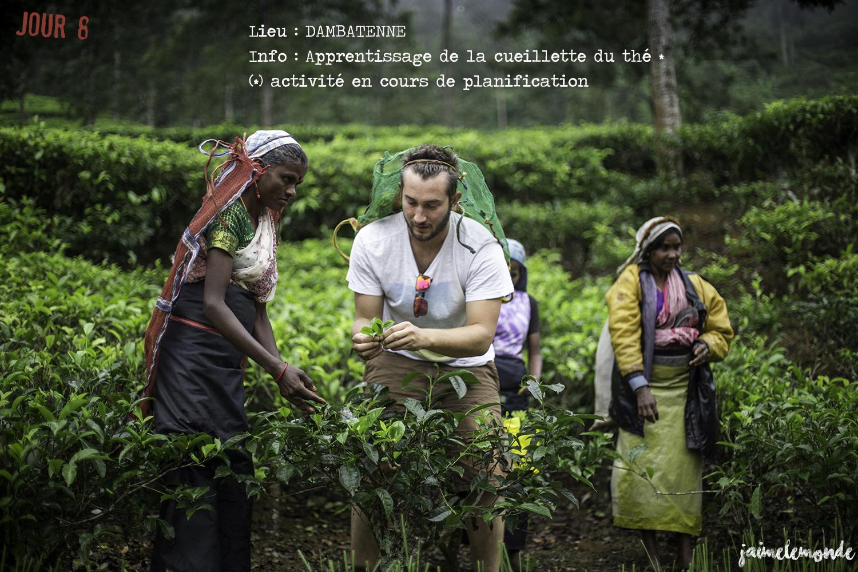 Voyage Sri Lanka - Itinéraire Jour 8 - 4 Dambatenne - Apprentissage de la cueillette - ©jaimelemonde