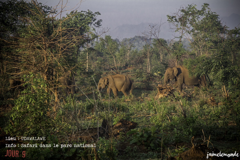 Voyage Sri Lanka - Itinéraire Jour 9 - 4 Udawalawe - Safari dans le parc national - ©jaimelemonde
