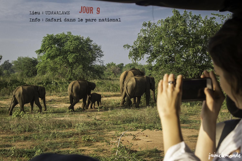 Voyage Sri Lanka - Itinéraire Jour 9 - 6 Udawalawe - Safari dans le parc national - ©jaimelemonde