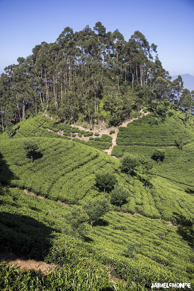 Voyage au Sri Lanka - ©jaimelemonde (10)