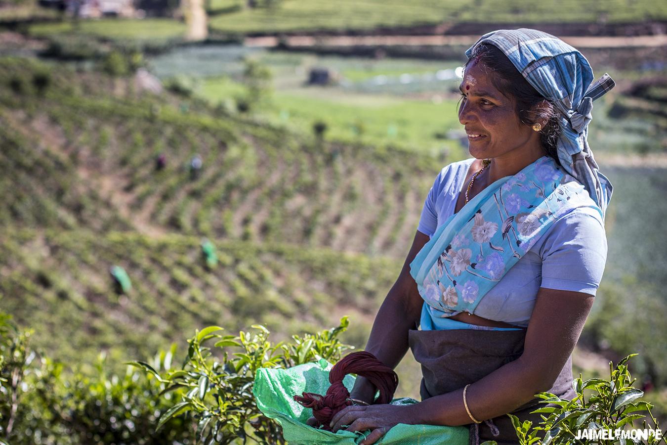 Voyage au Sri Lanka - ©jaimelemonde (11)