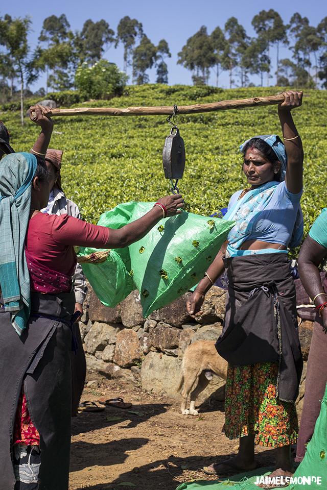 Voyage au Sri Lanka - ©jaimelemonde (12)