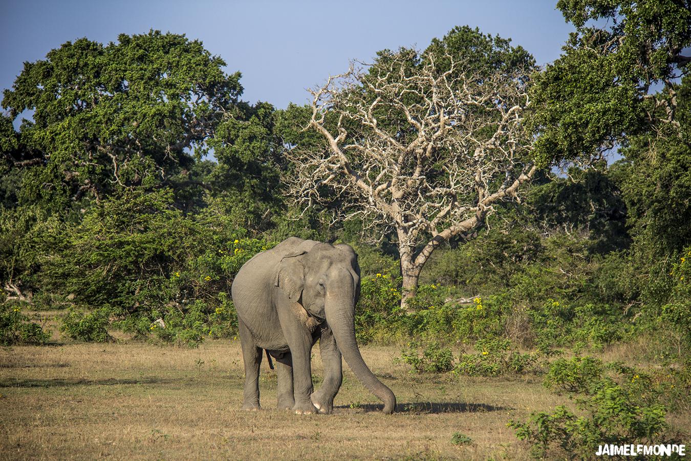 Voyage au Sri Lanka - ©jaimelemonde (14)
