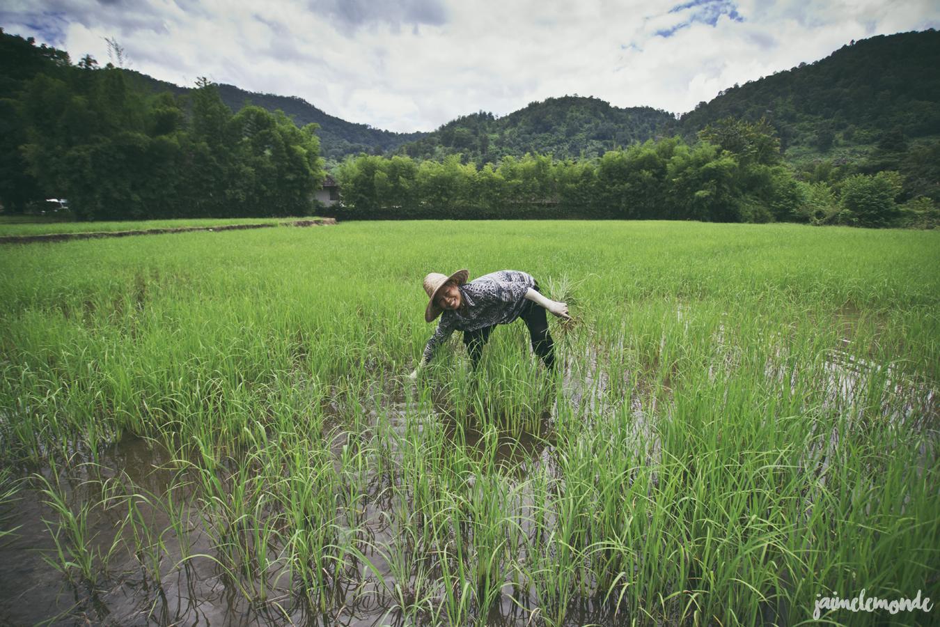 blog voyage - 50 photos souvenirs de Thaïlande - ©jaimelemonde (30)