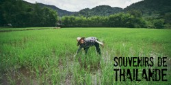 blog voyage - 50 photos souvenirs de Thaïlande - ©jaimelemonde - Image à la une